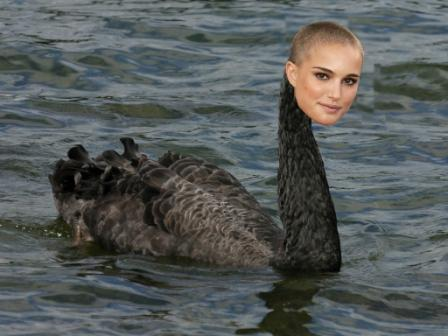 Black Swan with nat compressed